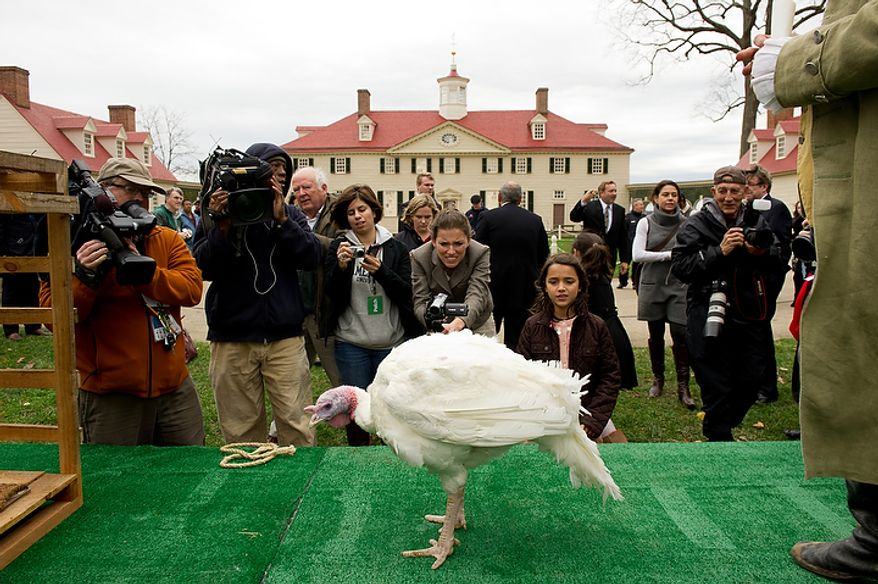 Visitors and members of the media gather around Liberty, the turkey pardoned by President Obama, as it is welcomed to Mount Vernon in Virginia on Nov. 23, 2011. (Andrew Harnik/The Washington Times)
