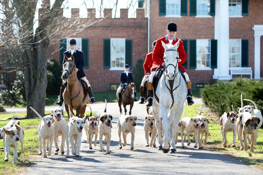 Huntsman Dennis Downing, right, leads the Blue Ridge Hunt Thursday Nov. 24, 2011 at Historic Long Branch Plantation in Millwood, Va., for a Thanksgiving day fox hunt. (AP Photo/The Winchester Star, Scott Mason)