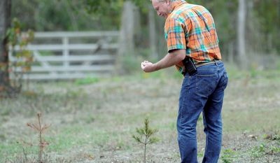 David Barfield checks the drought-stricken saplings at his Christmas tree farm in New Caney, Texas. Only a handful of the 500 saplings he planted have survived this year's drought and summer heat wave. (Associated Press)
