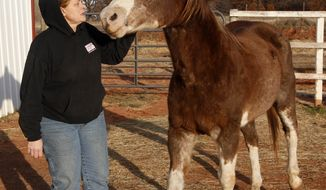 Cheri White Owl, founder of Horse Feathers Equine Rescue, is pictured with one of the 33 horses for which she  cares in Guthrie, Okla., on Tuesday, Nov. 29, 2011. Ms. White Owl said she's seen more horse neglect during the recession, which coincided with the end of horse slaughtering in the U.S. (AP Photo/Sue Ogrocki)