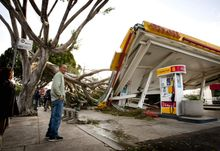 Keith Curo of Pasadena, Calif., stops to look over the damage caused by a fallen tree at a Shell gas station on Thursday, Dec. 1, 2011, in Pasadena. Some of the worst winds in years blasted through California overnight, with gusts up to 97 mph. (AP Photo/Bret Hartman)