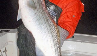 Dr. Ken Neil, a Virginia Beach-area dentist, is rewarded with a hefty rockfish for braving the cold.