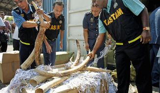 Malaysian customs officers last month seized hundreds of elephant tusks worth an estimated $1.3 million. Asian crime syndicates are increasingly involved in poaching and in the illegal ivory trade across Africa, a wildlife trade monitoring group says. (Associated Press)
