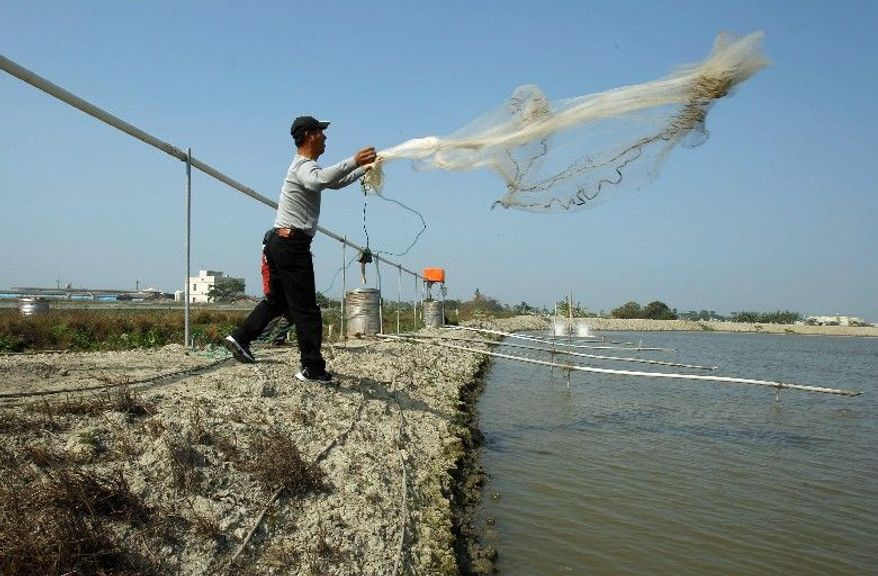 A fisherman casts a net into a commercial farming pond in Xuejia, southern Taiwan. The fish farmers on the terraced plains above Taiwan's west coast are riding a Chinese boom, thanks to import duties Beijing lowered to win over the island's voters. (Associated Press)