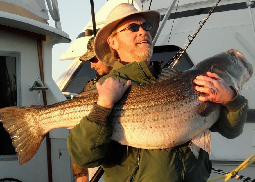 DAVID BRABRAND Virginia Beach angler Tommy Athey hoists a 49-pound striped bass. The recent balmy weather has given fishermen a reason to venture out onto the water.