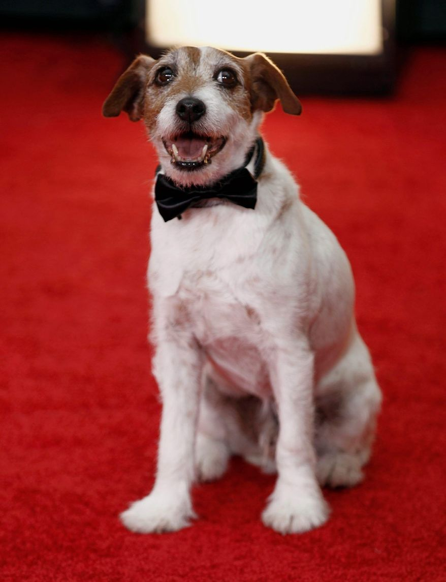 """Uggie, the canine star of the Oscar-winning film """"The Artist."""" ** FILE **"""