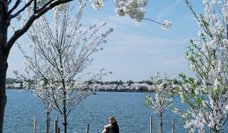 Kerry Edwards of Frederick, Md., takes advantage of a day off on Monday, March 19, 2012, to enjoy the beautiful weather and the cherry blossoms along the Tidal Basin in Washington. (Barbara L. Salisbury/The Washington Times)