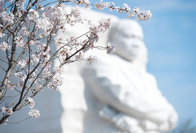 Cherry blossoms frame the Martin Luther King Jr. Memorial in Washington on March 19, 2012. (Barbara L. Salisbury/The Washington Times)