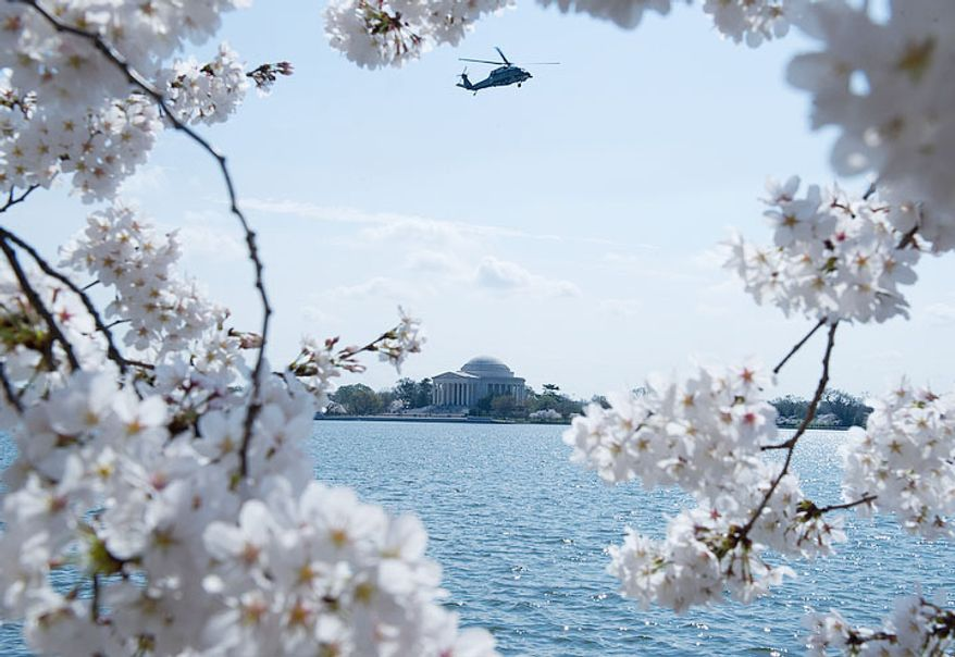 A helicopter flies above the Jefferson Memorial, seen here through cherry blossoms along the Tidal Basin in Washington, D.C., on March 19, 2012. (Barbara L. Salisbury/The Washington Times)