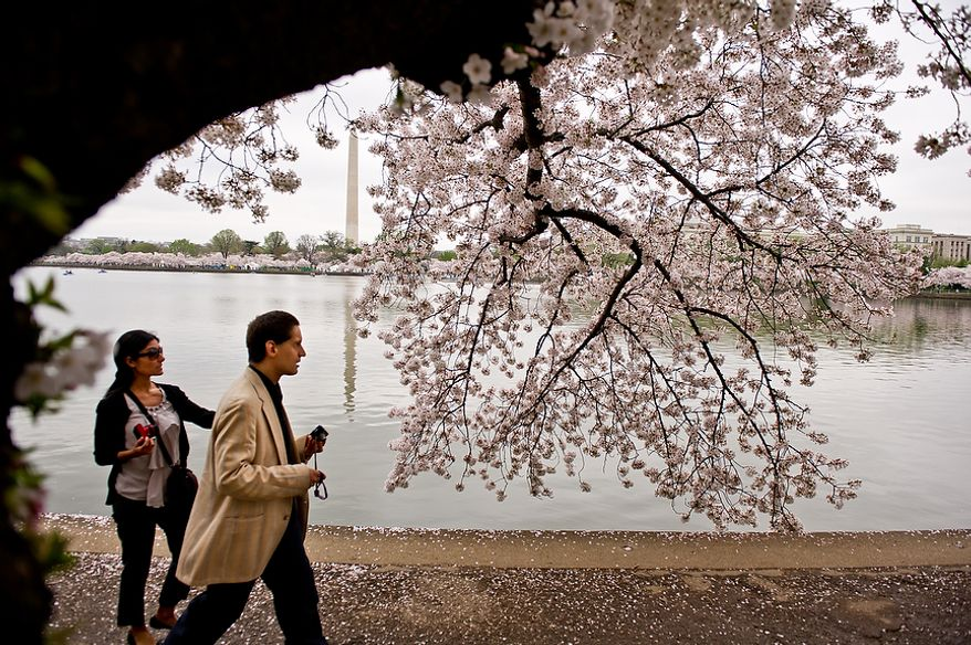 """Autistic adult James L., second from left, with Community Services for Autistic Adults and Children, based in Montgomery Village, Md., is accompanied by staff member Dide Cimen, left, as he takes photographs of the Cherry Blossoms along the Tidal Basin, Washington, D.C., Wednesday, March 21, 2012. The """"InFocus Project†is a way for adults with autism to develop forms of self expression and social skills while producing work that has been featured in art shows, given to donors to C.S.A.A.C., and sold on an online store. (Andrew Harnik/The Washington Times)"""