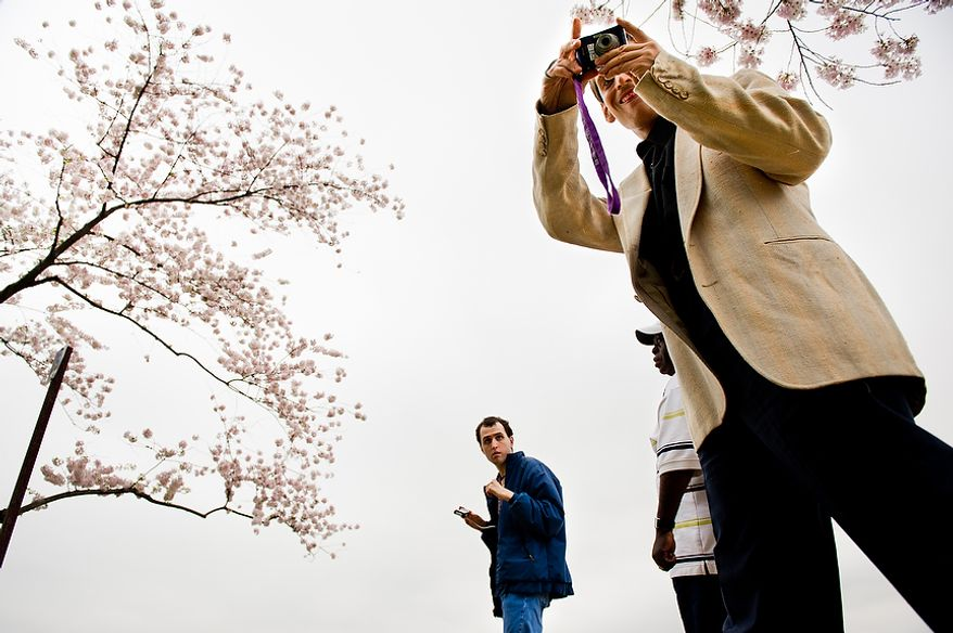 """Autistic adults Brian D., center, and James L., right, with Community Services for Autistic Adults and Children, based in Montgomery Village, Md., accompanied by staff member Agyemang Nkrumah [ck], second from right, take photographs of the Cherry Blossoms along the Tidal Basin, Washington, D.C., Wednesday, March 21, 2012. The """"InFocus Project†is a way for adults with autism to develop forms of self expression and social skills while producing work that has been featured in art shows, given to donors to C.S.A.A.C., and sold on an online store. (Andrew Harnik/The Washington Times)"""