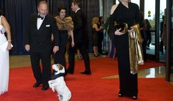 "Uggie, the canine star of the film ""The Artist,"" walks the red carpet with Diane Sawyer at the White House Correspondents' Association dinner on Saturday, April 28, 2012, in Washington. Uggie was a guest of The Washington Times. (AP Photo/Kevin Wolf)"