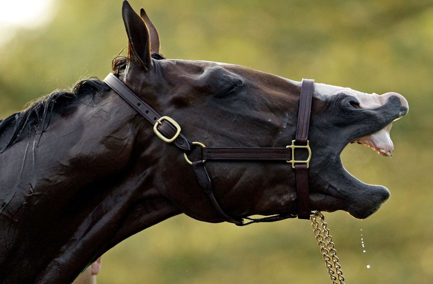 Kentucky Derby entrant Union Rags during his bath after a morning workout at Churchill Downs Friday, May 4, 2012, in Louisville, Ky. (AP Photo/Charlie Riedel)