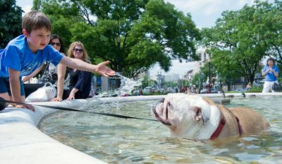 "Chase Taber, left, 6, of Bowie, Md. tries to help ""Chi Chi"" the bulldog cool off in the fountain at Dupont Circle on Sunday, May 13, 2012. (Barbara L. Salisbury/The Washington Times)"