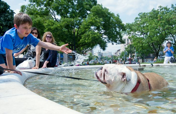 """Chase Taber, left, 6, of Bowie, Md. tries to help """"Chi Chi"""" the bulldog cool off in the fountain at Dupont Circle on Sunday, May 13, 2012. (Barbara L. Salisbury/The Washington Times)"""