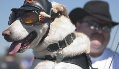 Seven-year-old Zeke and owner David Taylor of CT hang out on a specially modified dog-friendly motorcycle in the Pentagon's North parking lot, where bikers assembled before the 18th annual Rolling Thunder ride, Sunday, May 29, 2005.  The event pays homage to POW's. ( Allison Shelley / The Washington Times )