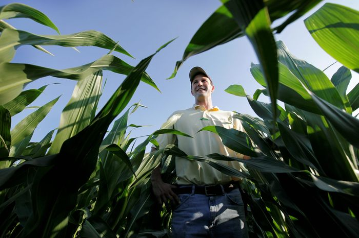 Iowa farmer Matt Danner stands among the corn on his farm near Templeton. The state, which is enjoying a booming farm economy, could be crucial in deciding who will win the presidency of a country still reeling from recession. (Associated Press)