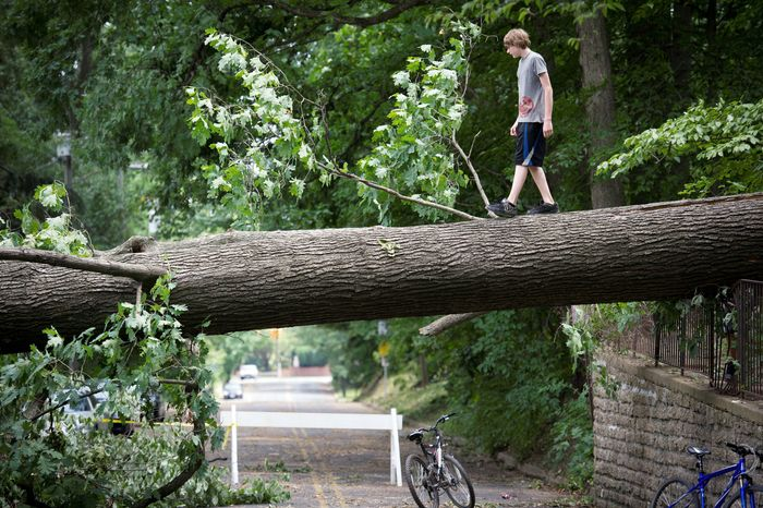Tyler Taylor of Falls Church performs a balancing act as he walks on a fallen tree on West Great Falls Street on Sunday, two days after a deadly storm. (Rod Lamkey Jr./The Washington Times)