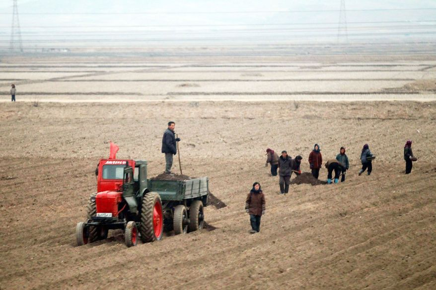 North Koreans work in a field on the outskirts of Pyongyang on an early spring day, but their efforts annually fall way short of meeting the needs of the country's 24 million people. According to a U.N. report, the lack of food is particularly dire for children younger than 5. Not getting the food they need leaves many stunted and malnourished. (Associated Press)