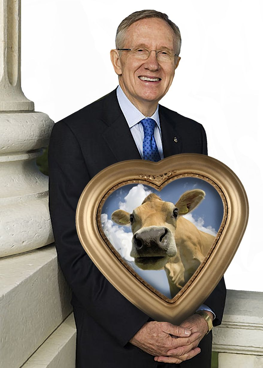 Illustration Reid Loves Cows by John Camejo for The Washington Times