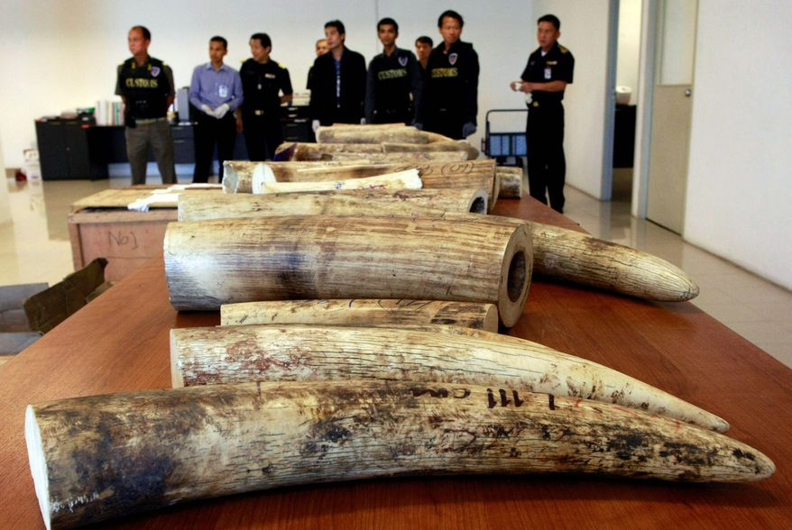 Thai custom officials show off confiscated ivory. Though they are proud of the illegally trafficked wildlife they have seized in the past two years, extensive police corruption and mafialike organization among traffickers help many smugglers evade international law. (Associated Press)