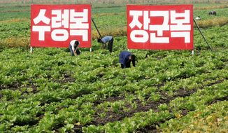 associated press  North Koreans work in the fields at Migok Cooperative Farm in Sariwon, North Hwanghae province on Sunday. Farmers would be able to keep a bigger share of their crops under proposed changes to boost production by collective farms.
