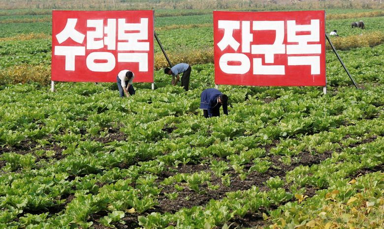 associated press  North Koreans work in the fields at Migok Cooperative Farm in Sariwon, North Hwanghae province on Sunday. Farmers would b