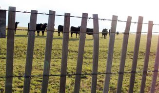 Cattle graze on a ranch outside of Encino, N.M. With drought drying out grazing land and driving up hay prices, authorities in drought-stricken states say some ranchers have started stealing hay or leaving gates open so their cattle can graze on greener pastures. (Associated Press)