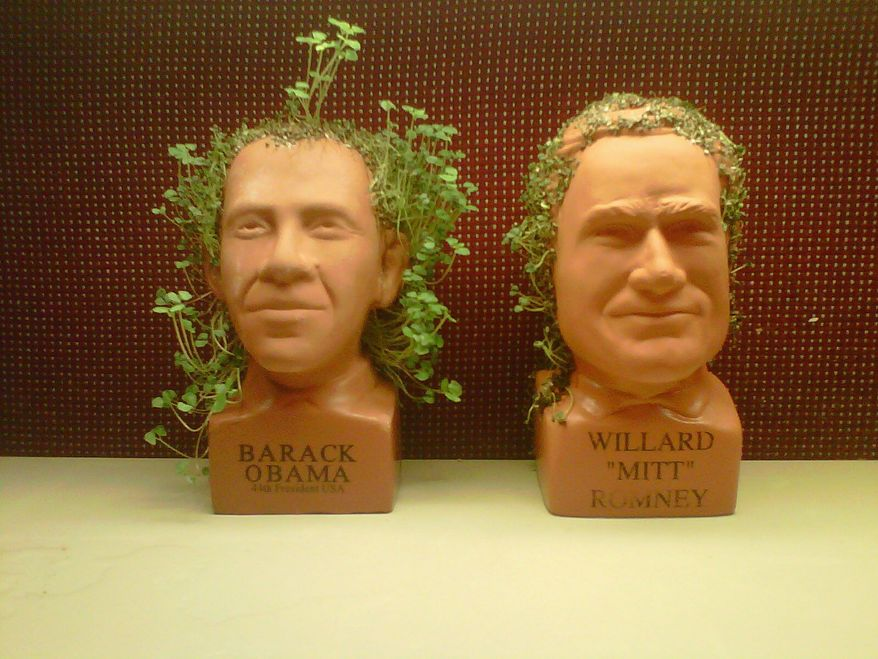 What could it predict for the election outcome? Chia Obama and Chia Romney sprout with distinctive difference as they grow in The Washington Times newsroom. (The Washington Times)