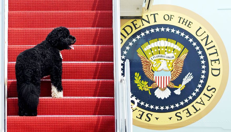 Bo boards Air Force One as a friendly flight companion for President Obama. Tales of presidential pets are featured in a book by author Jennifer B. Pickens of Dallas.