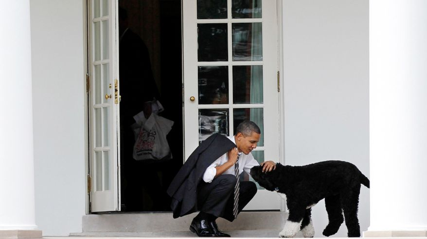 In this March 15, 2012, file photo, President Barack Obama pets the family dog Bo, a Portuguese water dog, outside the Oval Office of the White House in Washington.  (AP Photo/Pablo Martinez Monsivais, File)