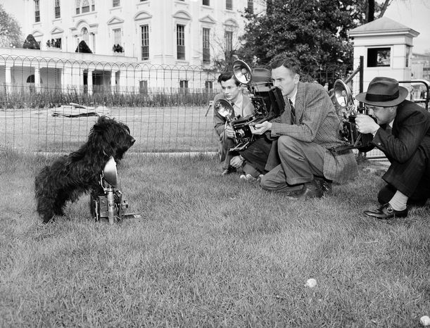 Fala, the pet Scottie of President Franklin Delano Roosevelt, obliges news photographers as he poses outside the White House on April 7, 1942 for his second birthday. (AP Photo/grs)
