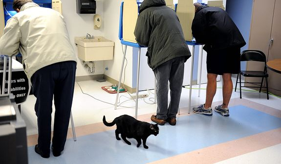 As voters cast their ballots, a cat that resides at the Kindred Transitional Care and Rehabilition Center wanders through on Election Day, Tuesday Nov. 6, 2012, in South Bend, Ind. (AP Photo/Joe Raymond)