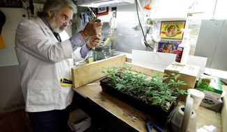 Jake Dimmock, co-owner of the Northwest Patient Resource Center medical marijuana dispensary in Seattle, works on balancing the pH level of the soil used to grow new medical marijuana plants on Nov. 7, 2012. (Associated Press)