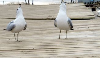 Seagulls screech on the boardwalk in Ocean Grove, N.J. The boardwalk was warped and cracked by Superstorm Sandy. Tourists and residents alike head to the boardwalk to spend their money on food and drinks or on a variety of games to win a stuffed animal.
