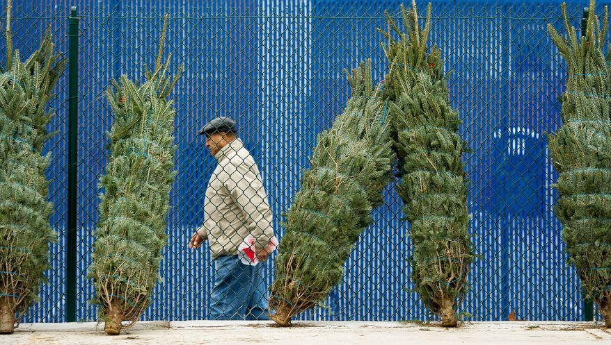 Christmas trees were for sale at the Eastern Market on Capitol Hill. (Andrew Harnik/The Washington Times)