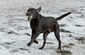 dogs_20121218_8733