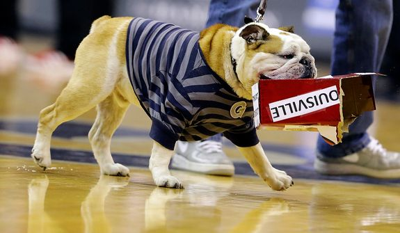 """Georgetown mascot """"Jack the Bulldog"""" tears into a box labeled as Louisville during the second half of an NCAA college basketball game, Saturday, Jan. 26, 2013, in Washington. Georgetown won 53-51. (AP Photo/Alex Brandon)"""