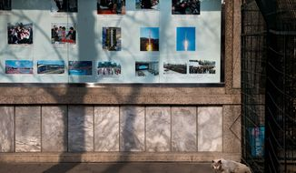 """A cat walks out from a fence near a display of photos of the late North Korean leader Kim Jong Il, new leader Kim Jong Un and the country's successful long range rocket launch, outside the North Korean embassy in Beijing Tuesday, Feb. 12, 2013. North Korea apparently conducted a widely anticipated nuclear test Tuesday, strongly indicated by an """"explosion-like"""" earthquake that monitoring agencies around the globe said appeared to be unnatural. (AP Photo/Andy Wong)"""
