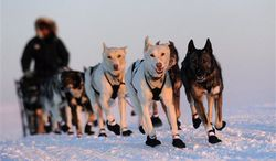Iditarod musher Peter Kaiser, from Bethel, Alaska, races from Safety to the Nome, Alaska finish line of the 2011 Iditarod Trail Sled Dog Race, March 15, 2011. (AP Photo/Anchorage Daily News, Bob Hallinen, File)