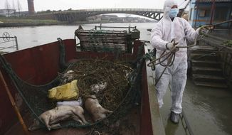 ** FILE ** In this Wednesday, March 13, 2013, file photo, a worker in protective clothing prepares to haul away dead pigs pulled from a river along Zhonglian village of Jinshan district in Shanghai. (AP Photo/File)