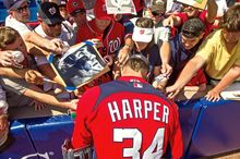 After each day of spring training in Viera, Fla., Bryce Harper spent time signing autographs. The popular Washington Nationals outfielder makes children a priority over waiting adults, who could fetch thousands of dollars at online auctions for merchandise he has signed. (Andrew Harnik/The Washington Times)