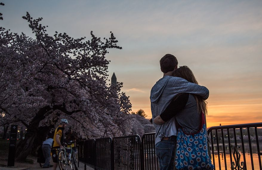 A couple hugs each other as the sun slowly rises on the cherry blossoms at the Tidal Basin in Washington, DC., Thursday, April 11, 2013. (Andrew S Geraci/The Washington Times)
