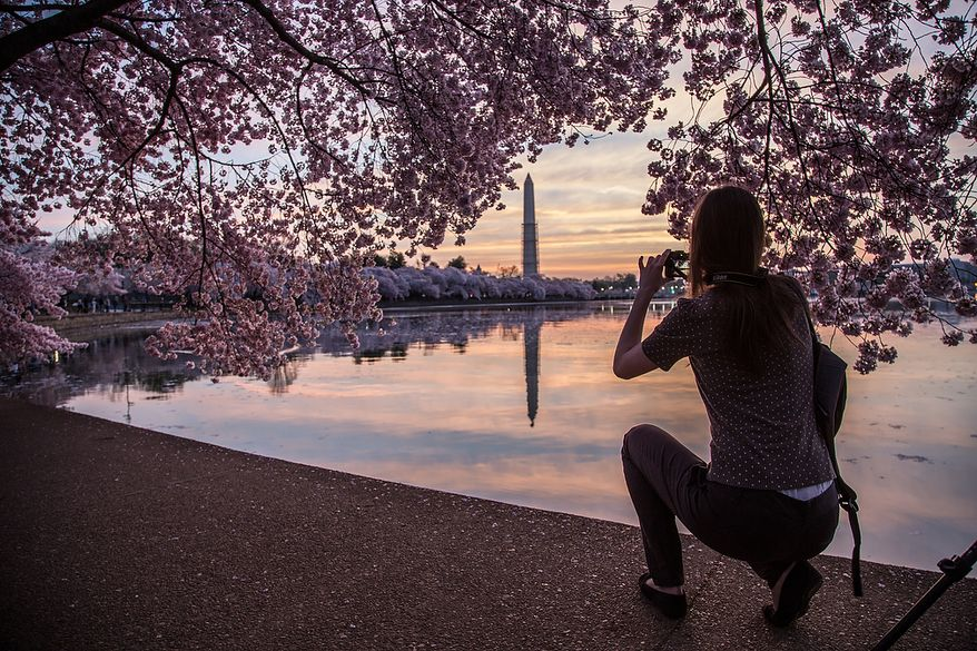 A woman kneels to photograph the Washington Monument framed in cherry blossoms at the tidal basin, in Washington, DC., Thursday, April 11, 2013. (Andrew S Geraci/The Washington Times)