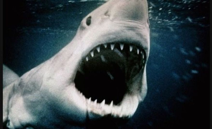 A still from  Steven Spielberg's 'Jaws', which he directed in 1975. (Image: Paramount Pictures)