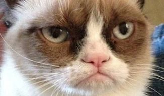 "** FILE ** ""Grumpy Cat"" (Image: Youtube)"