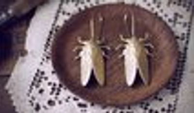 Christine Domanic has seen sales of her cicada earrings double as the real bugs appear. (Christine Domanic)