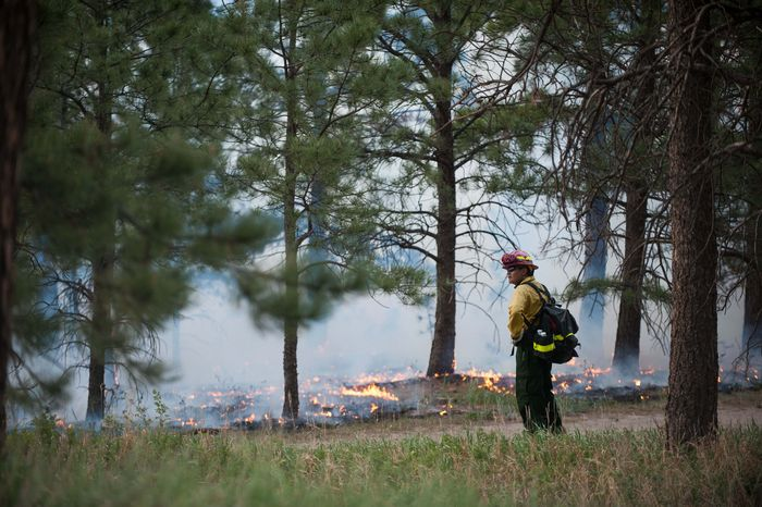A firefighter keeps watch over a controlled burn at the Black Forest Section 16 Trailhead Thursday, June 13, 2013, near Colorado Springs, Colo. Little more than 36 hours after it started in the Black Forest area northeast of Colorado Springs, the blaze surpassed last June's Waldo Canyon fire as the most destructive in state history. That blaze burned 347 homes and killed two people. (AP Photo/The Colorado Springs Gazette, Michael Ciaglo)