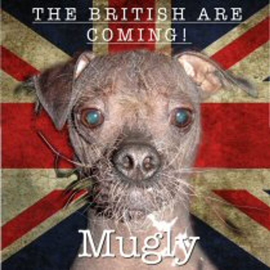 8 year old Mugly is a chinese crested and a rescue dog. (Credit: World's Ugliest Dog Competition)