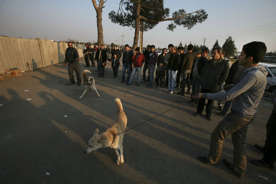 **FILE** Iranian vendors hold their dogs as they wait for customers at an animal vendors' weekly open air market in a suburb of Tehran on Dec. 30, 2011. (Associated Press)